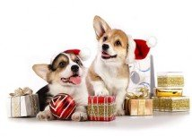 Jingle those bells: we are off for Christmas!